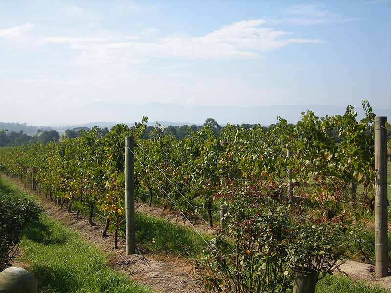 Barossa Valley Tour